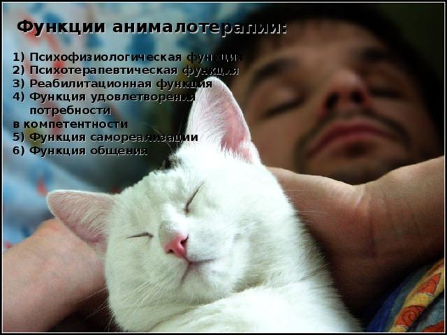 Функции анималотерапии:  Психофизиологическая функция Психотерапевтическая функция Реабилитационная функция Функция удовлетворения потребности в компетентности