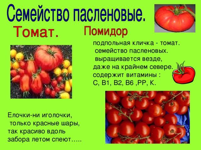 подпольная кличка - томат.  семейство пасленовых.  выращивается везде, даже на крайнем севере. содержит витамины : С, В1, В2, В6 ,РР, К. Елочки-ни иголочки,  только красные шары,  так красиво вдоль забора летом спеют…..