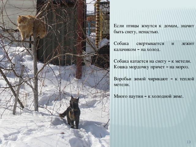 Если птицы жмутся к домам, значит быть снегу, ненастью. Собака свертывается и лежит калачиком – на холод. Собака катается на снегу – к метели. Кошка мордочку прячет – на мороз. Воробьи зимой чирикают – к теплой метели. Много паутин – к холодной зиме.