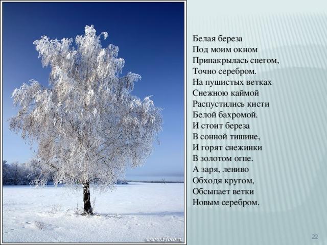 Белая береза Под моим окном Принакрылась снегом, Точно серебром. На пушистых ветках Снежною каймой Распустились кисти Белой бахромой. И стоит береза В сонной тишине, И горят снежинки В золотом огне. А заря, лениво Обходя кругом, Обсыпает ветки Новым серебром.