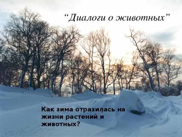 """"""" Диалоги о животных"""" Как зима отразилась на жизни растений и животных?"""