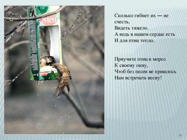 Сколько гибнет их — не счесть, Видеть тяжело. А ведь в нашем сердце есть И для птиц тепло. Приучите птиц в мороз К своему окну, Чтоб без песен не пришлось Нам встречать весну!