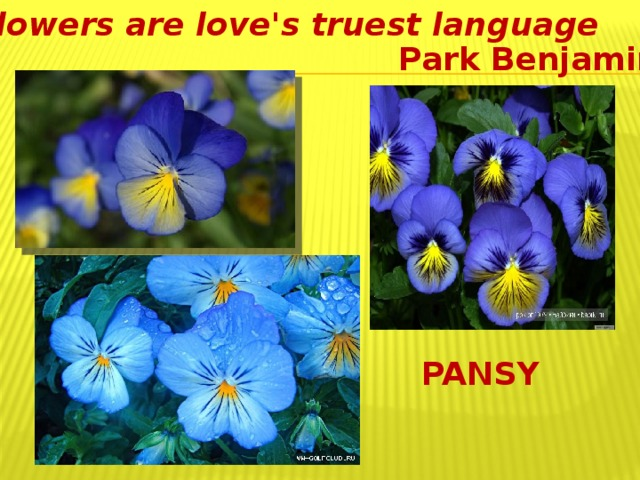 Flowers are love's truest language   Park Benjamin PANSY