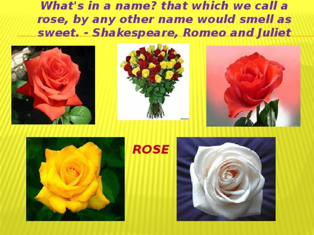 What's in a name? that which we call a rose, by any other name would smell as sweet. - Shakespeare, Romeo and Juliet ROSE
