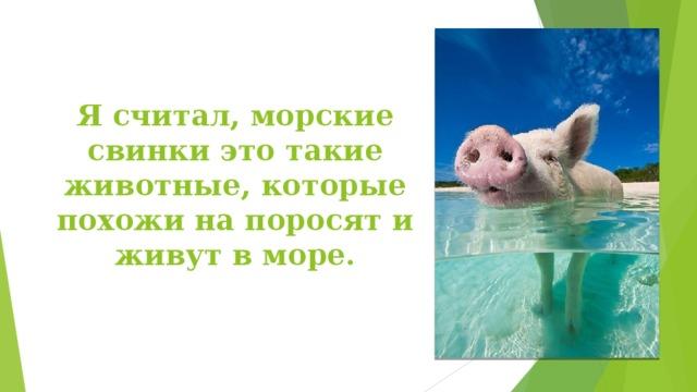 Я считал, морские свинки это такие животные, которые похожи на поросят и живут в море.