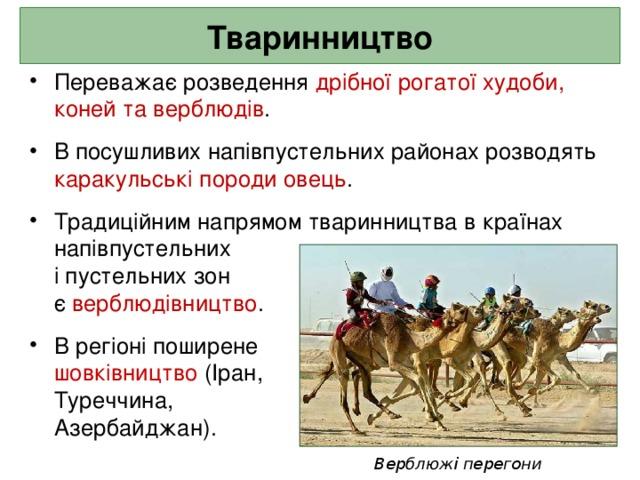 Тваринництво Переважає розведення дрібної рогатої худоби, коней та верблюдів .  В посушливих напівпустельних районах розводять каракульські породи овець .  Традиційним напрямом тваринництва в країнах напівпустельних  і пустельних зон  є верблюдівництво .  В регіоні поширене  шовківництво (Іран,  Туреччина,  Азербайджан).  Верблюжі перегони