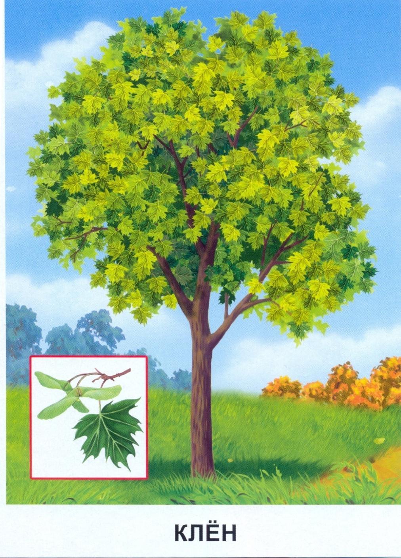 Картинки деревья с названиями
