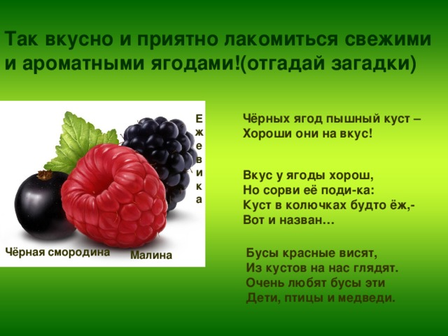 Так вкусно и приятно лакомиться свежими  и ароматными ягодами!(отгадай загадки)   Чёрных ягод пышный куст – Хороши они на вкус! Е ж е в и к а Вкус у ягоды хорош, Но сорви её поди-ка: Куст в колючках будто ёж,- Вот и назван… Чёрная смородина Бусы красные висят, Из кустов на нас глядят. Очень любят бусы эти Дети, птицы и медведи. Малина