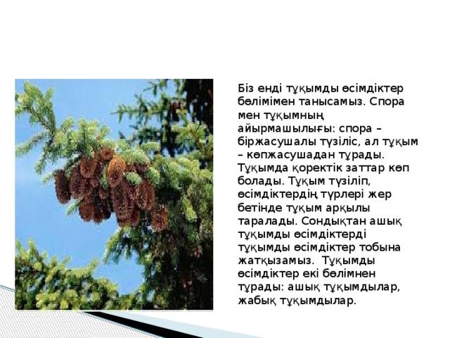 Біз енді тұқымды өсімдіктер бөлімімен танысамыз. Спора мен тұқымның айырмашылығы: спора – біржасушалы түзіліс, ал тұқым – көпжасушадан тұрады. Тұқымда қоректік заттар көп болады. Тұқым түзіліп, өсімдіктердің түрлері жер бетінде тұқым арқылы таралады. Сондықтан ашық тұқымды өсімдіктерді тұқымды өсімдіктер тобына жатқызамыз. Тұқымды өсімдіктер екі бөлімнен тұрады: ашық тұқымдылар, жабық тұқымдылар.