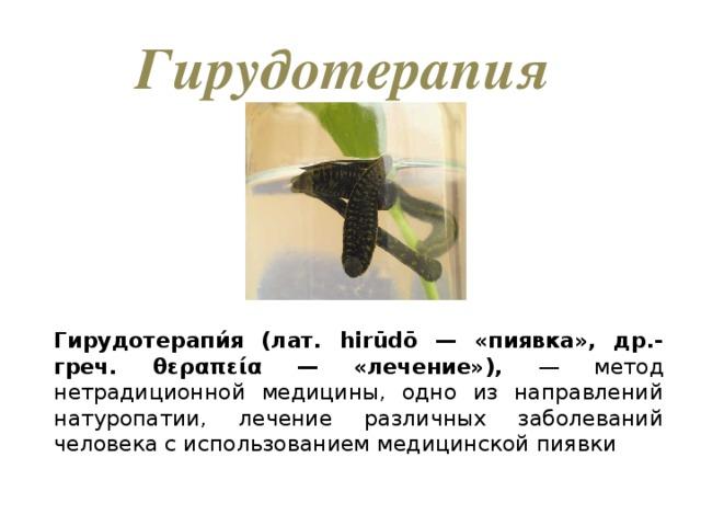 Гирудотерапия Гирудотерапи́я (лат. hirūdō — «пиявка», др.-греч. θεραπεία — «лечение»), — метод нетрадиционной медицины, одно из направлений натуропатии, лечение различных заболеваний человека с использованием медицинской пиявки