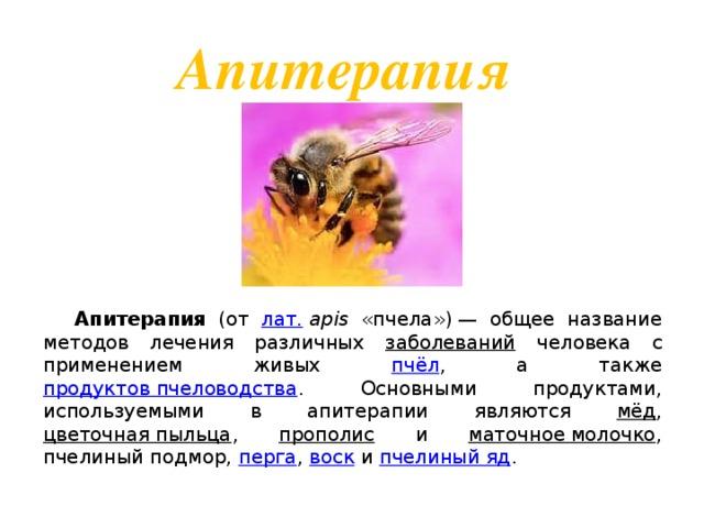 Апитерапия  Апитерапия (от лат.  apis «пчела»)— общее название методов лечения различных заболеваний человека с применением живых пчёл , а также продуктов пчеловодства . Основными продуктами, используемыми в апитерапии являются мёд , цветочная пыльца , прополис и маточное молочко , пчелиный подмор, перга , воск и пчелиный яд .