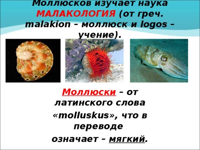 Моллюсков изучает наука МАЛАКОЛОГИЯ (от греч. malakion – моллюск и logos – учение). Моллюски – от латинского слова « molluskus », что в переводе означает – мягкий .