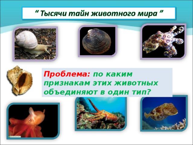 Проблема: по каким признакам этих животных об ъе диняют в один тип?
