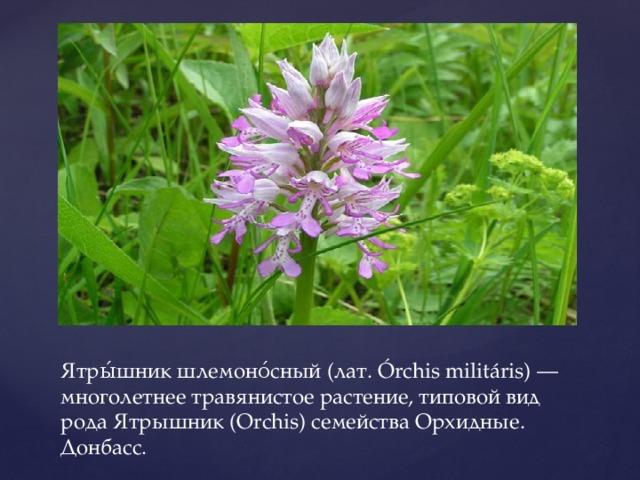 Ятры́шник шлемоно́сный (лат. Órchis militáris) — многолетнее травянистое растение, типовой вид рода Ятрышник (Orchis) семейства Орхидные. Донбасс.
