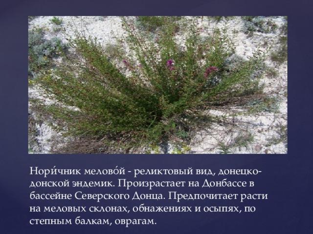 Нори́чник мелово́й - реликтовый вид, донецко-донской эндемик. Произрастает на Донбассе в бассейне Северского Донца. Предпочитает расти на меловых склонах, обнажениях и осыпях, по степным балкам, оврагам.
