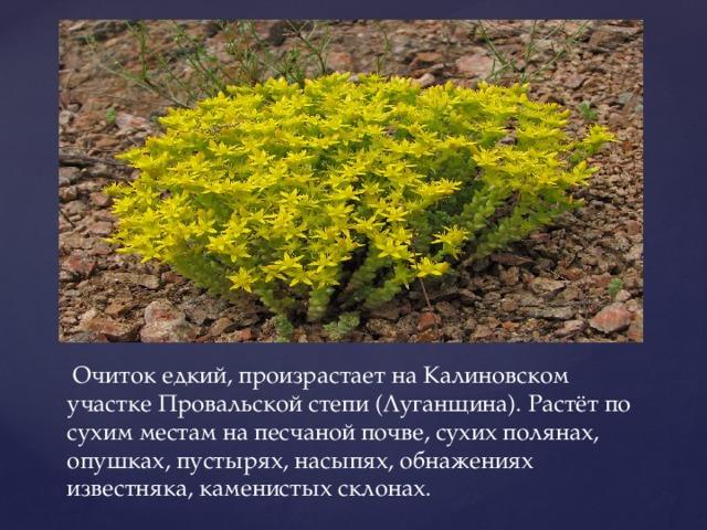 Очиток едкий, произрастает на Калиновском участке Провальской степи (Луганщина). Растёт по сухим местам на песчаной почве, сухих полянах, опушках, пустырях, насыпях, обнажениях известняка, каменистых склонах.