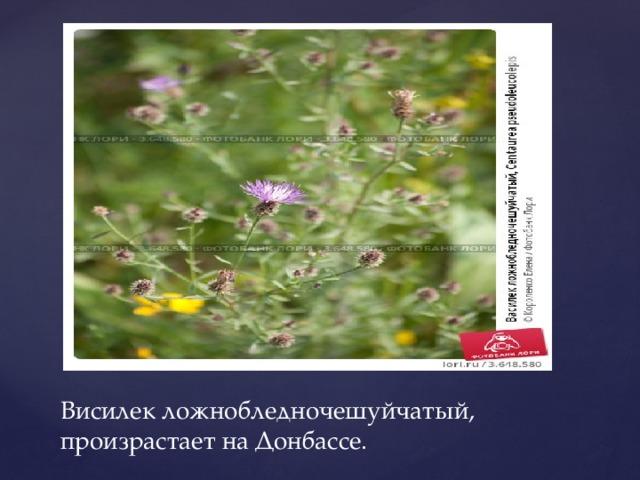 Висилек ложнобледночешуйчатый, произрастает на Донбассе.