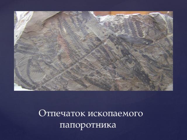 Отпечаток ископаемого  папоротника