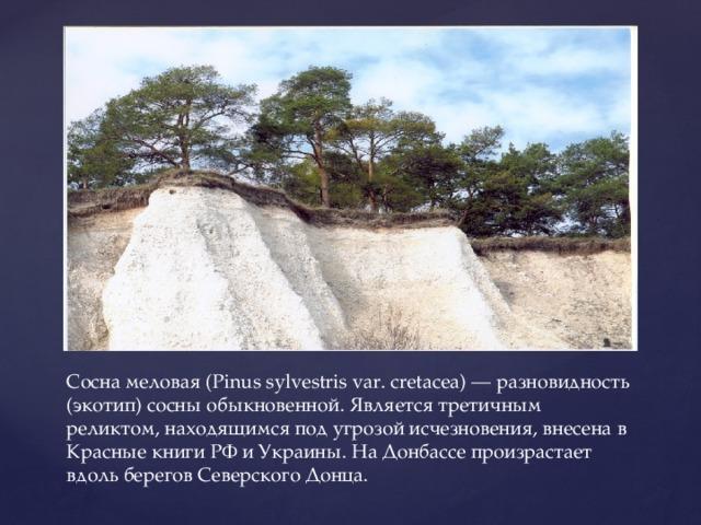 Сосна меловая (Pinus sylvestris var. cretacea) — разновидность (экотип) сосны обыкновенной. Является третичным реликтом, находящимся под угрозой исчезновения, внесена в Красные книги РФ и Украины. На Донбассе произрастает вдоль берегов Северского Донца.