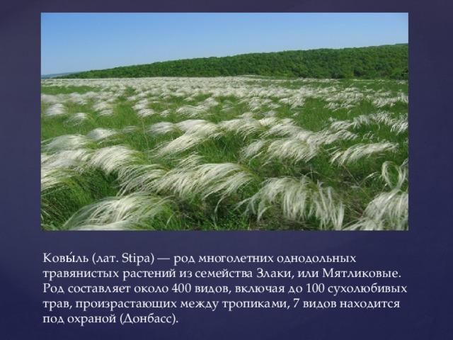 Ковы́ль (лат. Stipa) — род многолетних однодольных травянистых растений из семейства Злаки, или Мятликовые. Род составляет около 400 видов, включая до 100 сухолюбивых трав, произрастающих между тропиками, 7 видов находится под охраной (Донбасс).