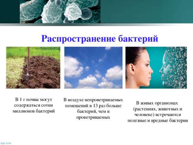Распространение бактерий В 1 г почвы могут содержаться сотни миллионов бактерий В воздухе непроветриваемых помещений в 13 раз больше бактерий, чем в проветриваемых В живых организмах (растениях, животных и человеке) встречаются полезные и вредные бактерии