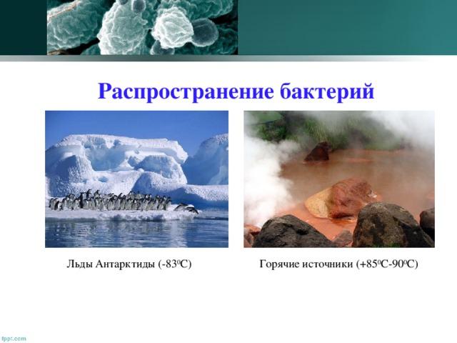 Распространение бактерий Льды Антарктиды (-83 0 С) Горячие источники (+85 0 С-90 0 С)
