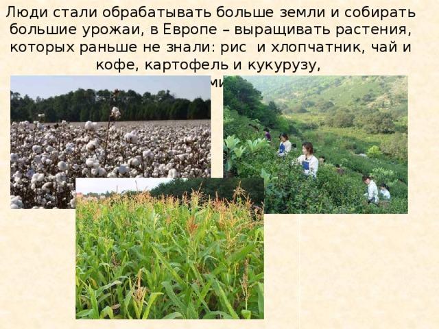 Люди стали обрабатывать больше земли и собирать большие урожаи, в Европе – выращивать растения, которых раньше не знали: рис и хлопчатник, чай и кофе, картофель и кукурузу, апельсины, помидоры, какао.