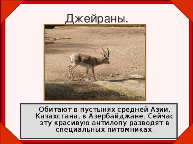 Джейраны.  Обитают в пустынях средней Азии, Казахстана, в Азербайджане. Сейчас эту красивую антилопу разводят в специальных питомниках .