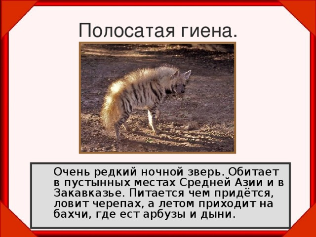 Полосатая гиена.  Очень редкий ночной зверь. Обитает в пустынных местах Средней Азии и в Закавказье. Питается чем придётся, ловит черепах, а летом приходит на бахчи, где ест арбузы и дыни.