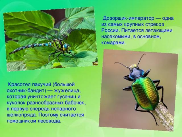 насекомые урала описание с картинками вкуснейший