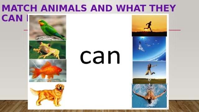 match animals and WHAT THEY CAN DO