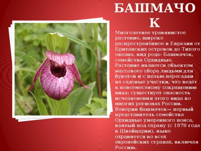 растения евразии фото с названиями верьте