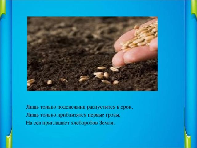 Лишь только подснежник распустится в срок, Лишь только приблизятся первые грозы, На сев приглашает хлеборобов Земля.