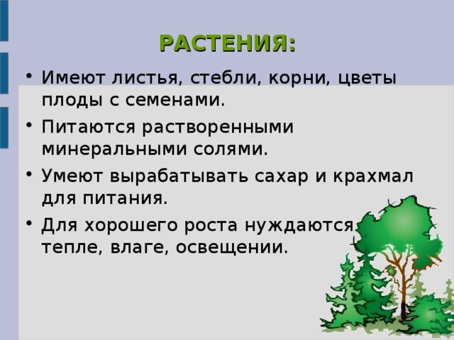 РАСТЕНИЯ: