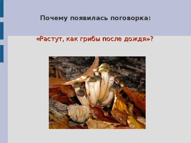 Почему появилась поговорка: «Растут, как грибы после дождя»?