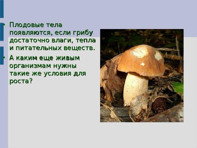 Плодовые тела появляются, если грибу достаточно влаги, тепла и питательных веществ. А каким еще живым организмам нужны такие же условия для роста?