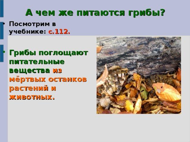 А чем же питаются грибы? Посмотрим в учебнике: с.112.  Грибы поглощают питательные вещества из мёртвых останков растений и животных.