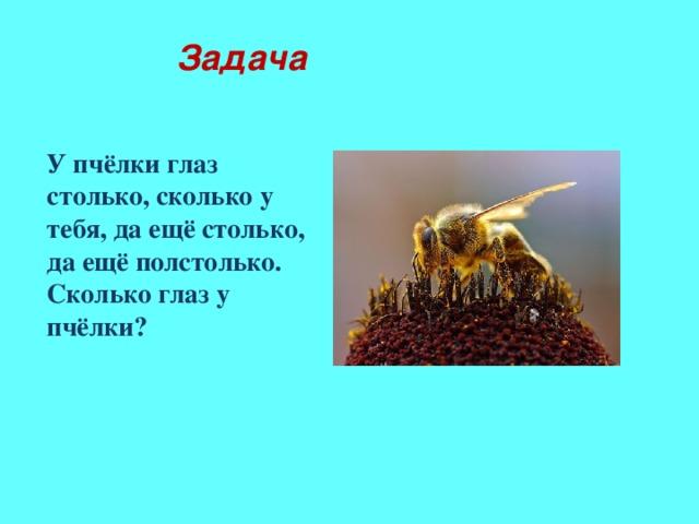 Задача У пчёлки глаз столько, сколько у тебя, да ещё столько, да ещё полстолько. Сколько глаз у пчёлки?  С животными какой группы тесно связана жизнь растений?  Каких насекомых – опылителей вы можете назвать?  А знаете ли вы, сколько глаз у пчелы?