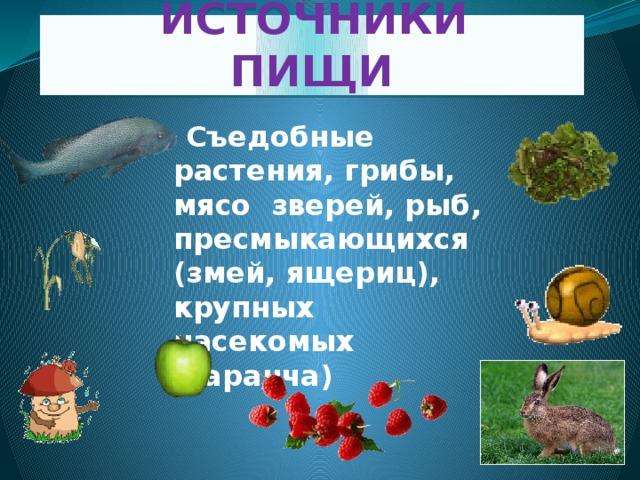 ИСТОЧНИКИ ПИЩИ  Съедобные растения, грибы, мясо зверей, рыб, пресмыкающихся (змей, ящериц), крупных насекомых (саранча)