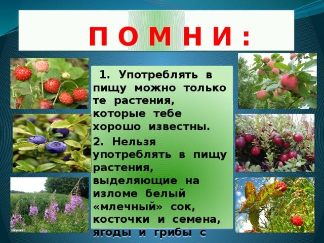 П О М Н И :  1. Употреблять в пищу можно только те растения, которые тебе хорошо известны. 2. Нельзя употреблять в пищу растения, выделяющие на изломе белый «млечный» сок, косточки и семена, ягоды и грибы с неприятным запахом.