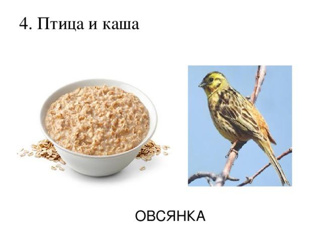 4. Птица и каша   ОВСЯНКА