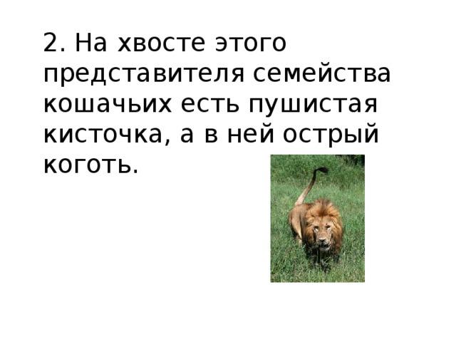 2. На хвосте этого представителя семейства кошачьих есть пушистая кисточка, а в ней острый коготь.