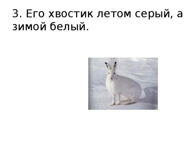 3. Его хвостик летом серый, а зимой белый.
