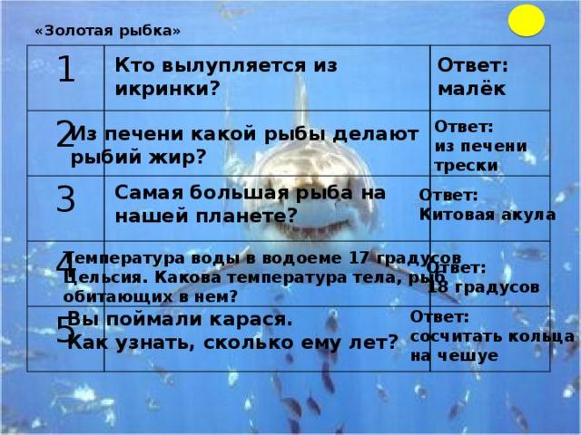 «Золотая рыбка»   1  2   3   4   5     Кто вылупляется из икринки? Ответ: малёк Ответ: из печени трески Из печени какой рыбы делают рыбий жир? Самая большая рыба на нашей планете? Ответ: Китовая акула Температура воды в водоеме 17 градусов Цельсия. Какова температура тела, рыб обитающих в нем? Ответ: 18 градусов Вы поймали карася. Ответ: Как узнать, сколько ему лет? сосчитать кольца на чешуе