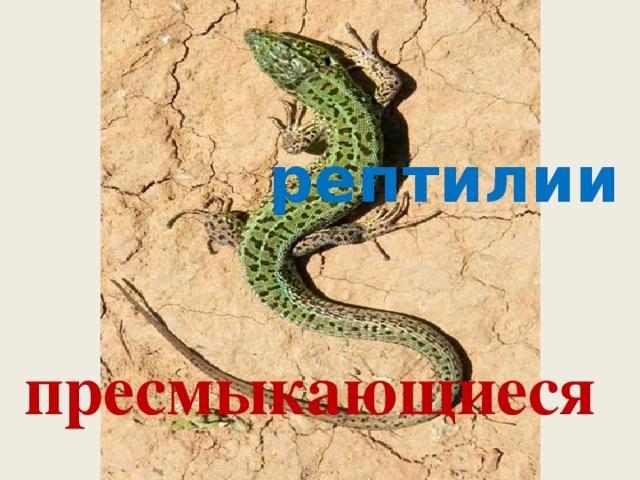 рептилии пресмыкающиеся