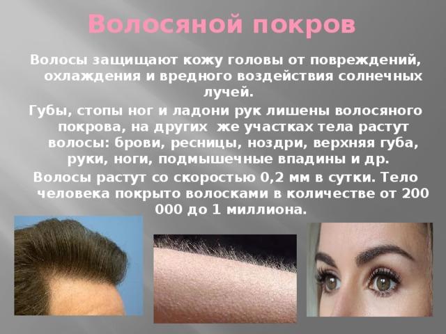 Волосяной покров Волосы защищают кожу головы от повреждений, охлаждения и вредного воздействия солнечных лучей. Губы, стопы ног и ладони рук лишены волосяного покрова, на других же участках тела растут волосы: брови, ресницы, ноздри, верхняя губа, руки, ноги, подмышечные впадины и др. Волосы растут со скоростью 0,2 мм в сутки. Тело человека покрыто волосками в количестве от 200 000 до 1 миллиона.