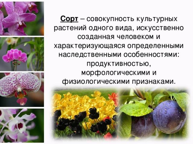 Сорт – совокупность культурных растений одного вида, искусственно созданная человеком и характеризующаяся определенными наследственными особенностями: продуктивностью, морфологическими и физиологическими признаками.