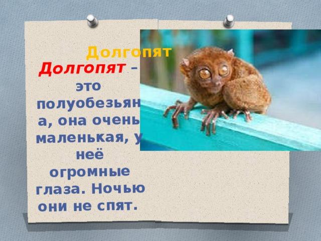 Долгопят Долгопят – это полуобезьяна, она очень маленькая, у неё огромные глаза. Ночью они не спят.