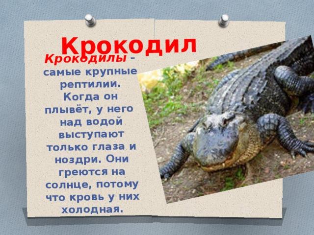 Крокодил Крокодилы – самые крупные рептилии. Когда он плывёт, у него над водой выступают только глаза и ноздри. Они греются на солнце, потому что кровь у них холодная.