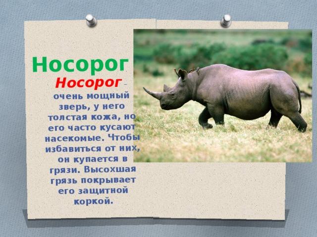 Носорог Носорог – очень мощный зверь, у него толстая кожа, но его часто кусают насекомые. Чтобы избавиться от них, он купается в грязи. Высохшая грязь покрывает его защитной коркой.